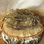 Маралий корень или Левзея сафроловидная