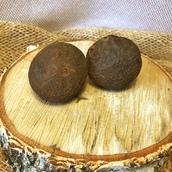 Черный орех плоды